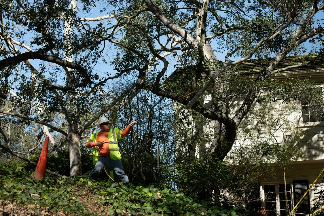 Bressi Ranch-Encinitas CA Tree Trimming and Stump Grinding Services-We Offer Tree Trimming Services, Tree Removal, Tree Pruning, Tree Cutting, Residential and Commercial Tree Trimming Services, Storm Damage, Emergency Tree Removal, Land Clearing, Tree Companies, Tree Care Service, Stump Grinding, and we're the Best Tree Trimming Company Near You Guaranteed!
