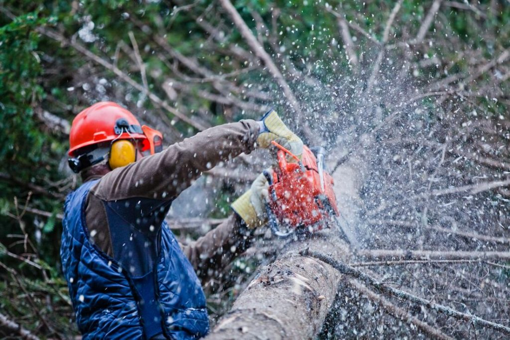 Carlsbad-Encinitas CA Tree Trimming and Stump Grinding Services-We Offer Tree Trimming Services, Tree Removal, Tree Pruning, Tree Cutting, Residential and Commercial Tree Trimming Services, Storm Damage, Emergency Tree Removal, Land Clearing, Tree Companies, Tree Care Service, Stump Grinding, and we're the Best Tree Trimming Company Near You Guaranteed!