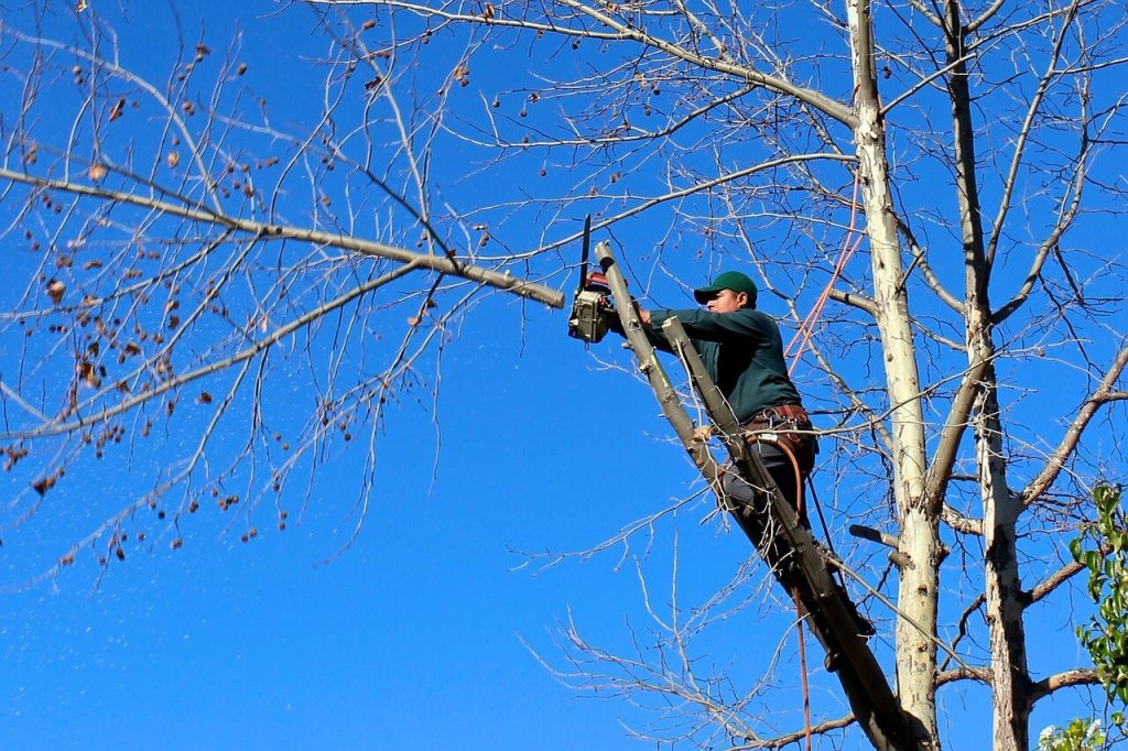 Contact Us-Encinitas CA Tree Trimming and Stump Grinding Services-We Offer Tree Trimming Services, Tree Removal, Tree Pruning, Tree Cutting, Residential and Commercial Tree Trimming Services, Storm Damage, Emergency Tree Removal, Land Clearing, Tree Companies, Tree Care Service, Stump Grinding, and we're the Best Tree Trimming Company Near You Guaranteed!
