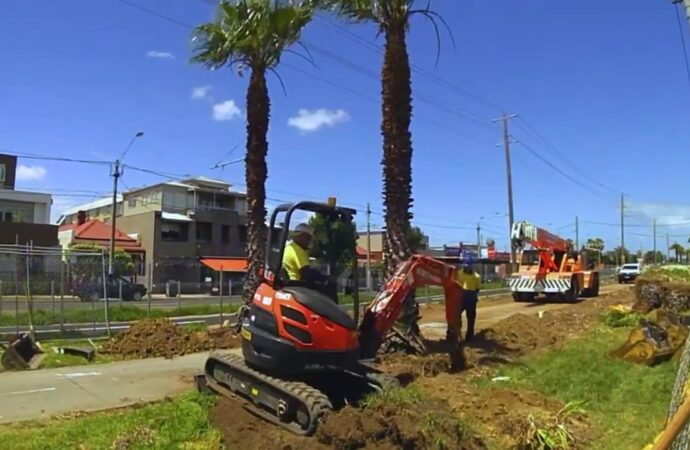 Palm Tree Removal-Encinitas CA Tree Trimming and Stump Grinding Services-We Offer Tree Trimming Services, Tree Removal, Tree Pruning, Tree Cutting, Residential and Commercial Tree Trimming Services, Storm Damage, Emergency Tree Removal, Land Clearing, Tree Companies, Tree Care Service, Stump Grinding, and we're the Best Tree Trimming Company Near You Guaranteed!