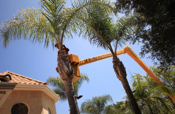 Palm Tree Trimming-Encinitas CA Tree Trimming and Stump Grinding Services-We Offer Tree Trimming Services, Tree Removal, Tree Pruning, Tree Cutting, Residential and Commercial Tree Trimming Services, Storm Damage, Emergency Tree Removal, Land Clearing, Tree Companies, Tree Care Service, Stump Grinding, and we're the Best Tree Trimming Company Near You Guaranteed!