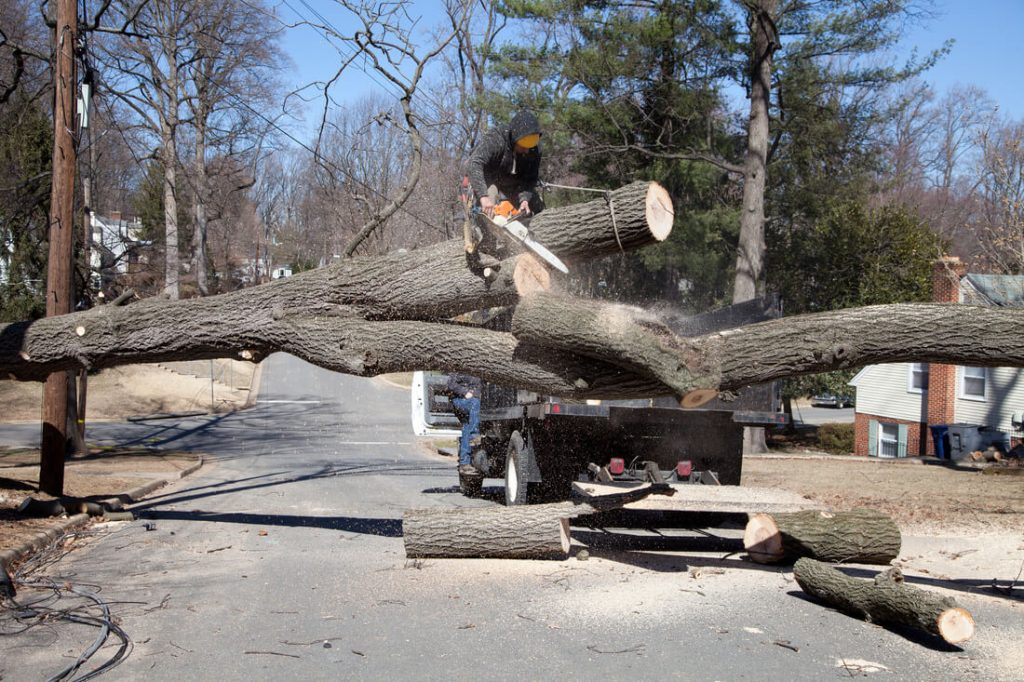 Residential Tree Services-Encinitas CA Tree Trimming and Stump Grinding Services-We Offer Tree Trimming Services, Tree Removal, Tree Pruning, Tree Cutting, Residential and Commercial Tree Trimming Services, Storm Damage, Emergency Tree Removal, Land Clearing, Tree Companies, Tree Care Service, Stump Grinding, and we're the Best Tree Trimming Company Near You Guaranteed!
