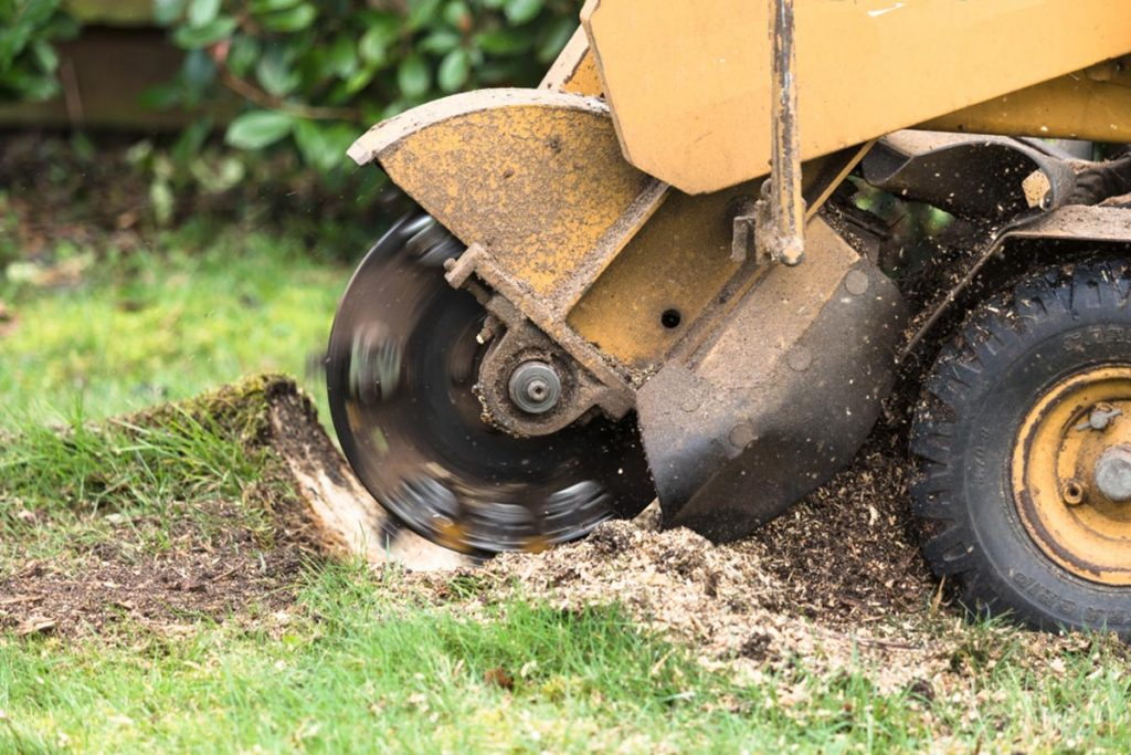 Stump Grinding-Encinitas CA Tree Trimming and Stump Grinding Services-We Offer Tree Trimming Services, Tree Removal, Tree Pruning, Tree Cutting, Residential and Commercial Tree Trimming Services, Storm Damage, Emergency Tree Removal, Land Clearing, Tree Companies, Tree Care Service, Stump Grinding, and we're the Best Tree Trimming Company Near You Guaranteed!