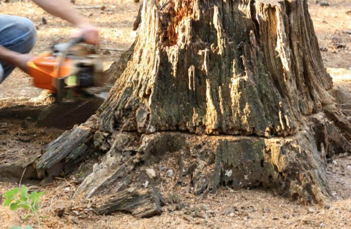 Stump Removal-Encinitas CA Tree Trimming and Stump Grinding Services-We Offer Tree Trimming Services, Tree Removal, Tree Pruning, Tree Cutting, Residential and Commercial Tree Trimming Services, Storm Damage, Emergency Tree Removal, Land Clearing, Tree Companies, Tree Care Service, Stump Grinding, and we're the Best Tree Trimming Company Near You Guaranteed!