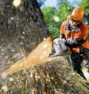 Tree Cutting-Encinitas CA Tree Trimming and Stump Grinding Services-We Offer Tree Trimming Services, Tree Removal, Tree Pruning, Tree Cutting, Residential and Commercial Tree Trimming Services, Storm Damage, Emergency Tree Removal, Land Clearing, Tree Companies, Tree Care Service, Stump Grinding, and we're the Best Tree Trimming Company Near You Guaranteed!