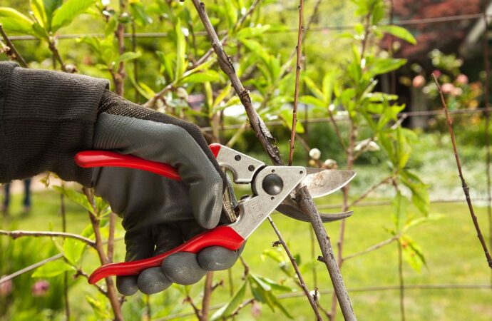 Tree Pruning-Encinitas CA Tree Trimming and Stump Grinding Services-We Offer Tree Trimming Services, Tree Removal, Tree Pruning, Tree Cutting, Residential and Commercial Tree Trimming Services, Storm Damage, Emergency Tree Removal, Land Clearing, Tree Companies, Tree Care Service, Stump Grinding, and we're the Best Tree Trimming Company Near You Guaranteed!