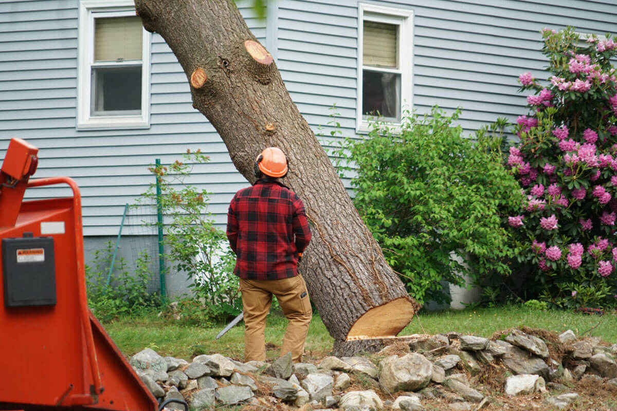 Tree Removal-Encinitas CA Tree Trimming and Stump Grinding Services-We Offer Tree Trimming Services, Tree Removal, Tree Pruning, Tree Cutting, Residential and Commercial Tree Trimming Services, Storm Damage, Emergency Tree Removal, Land Clearing, Tree Companies, Tree Care Service, Stump Grinding, and we're the Best Tree Trimming Company Near You Guaranteed!